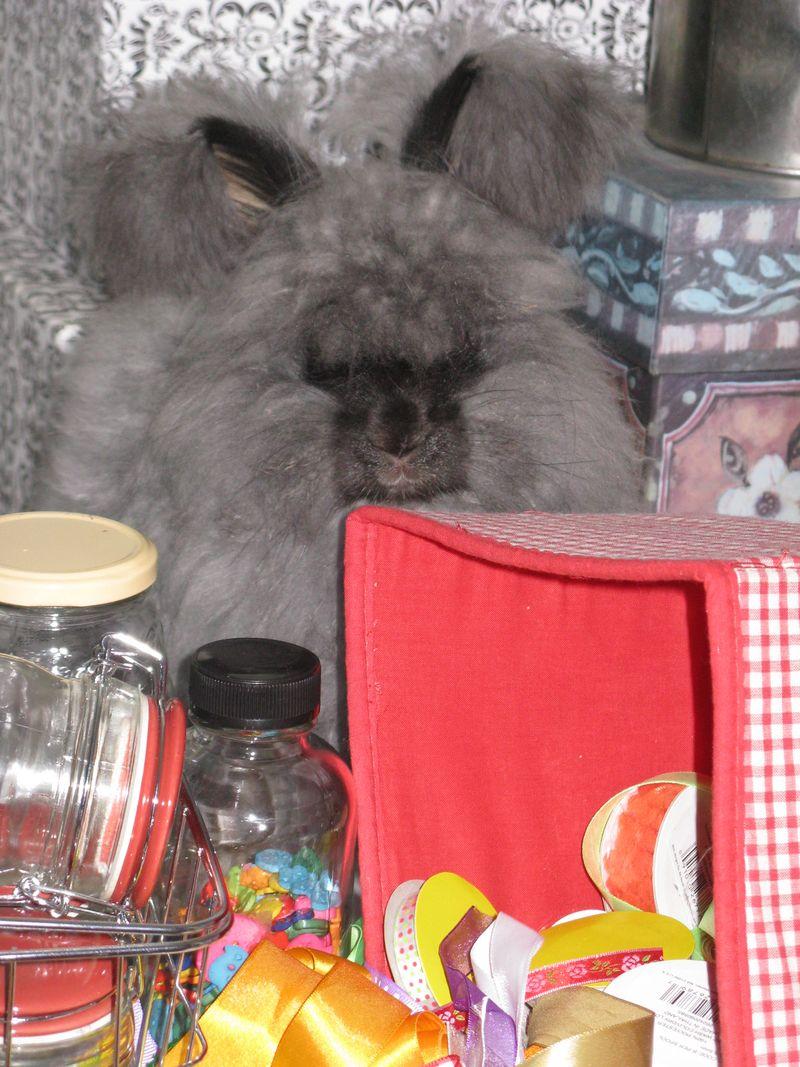 Rabbit mess 001